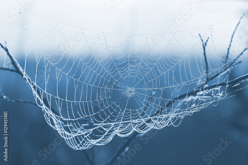 Fototapety, obrazy: spider web with water drops