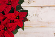 Red Star Christmas Flower Poinsettia On Rustic Wooden Background Copy Space