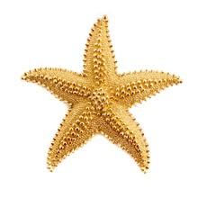 Star Fish Pendant