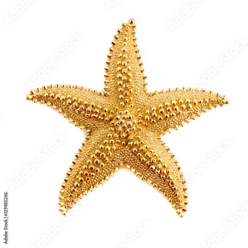 Fotografie, Obraz  Star fish Pendant