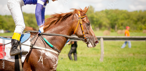 Photo racing horse portrait close up
