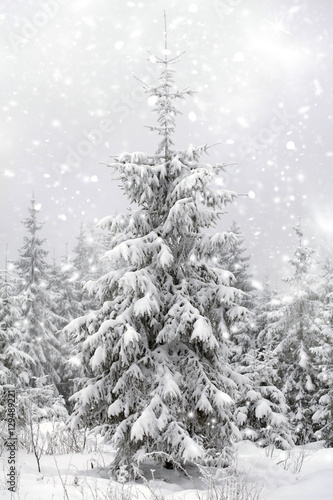 Valokuva  Christmas background with snowy fir trees
