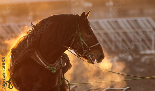 Fototapeta 競馬場の馬 obraz