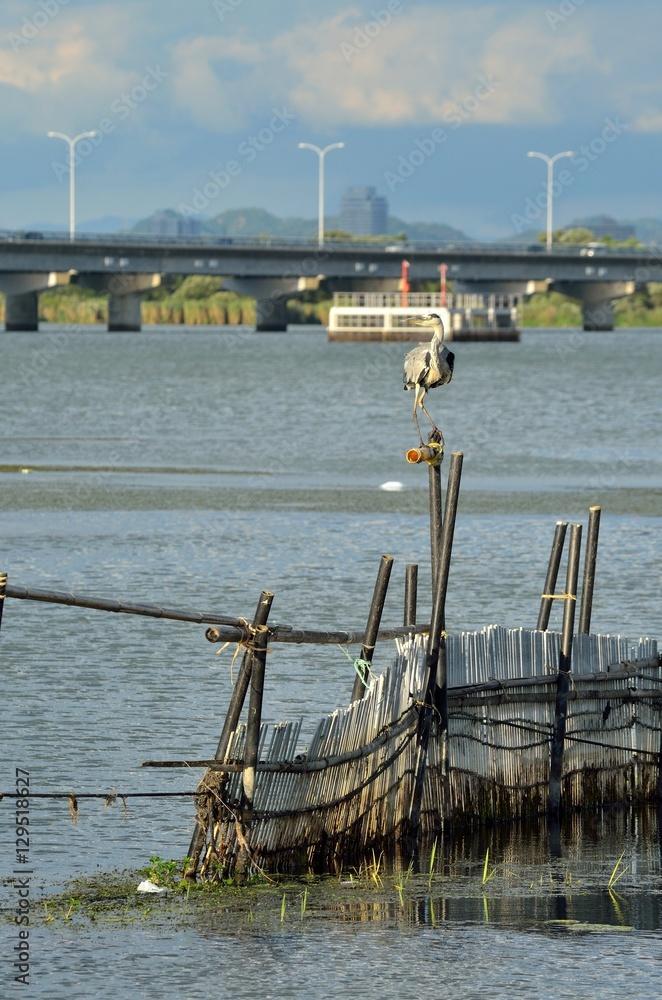 琵琶湖のえり漁 Poster
