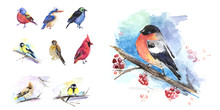 The Birds In Winter, Birds Set Of Watercolor Technique. Vector