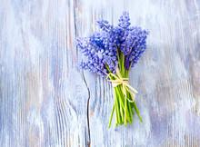 Blue Muscari Flowers (Grape Hyacinth) On Wooden Background