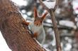 Curious squirrel peeking behind a tree