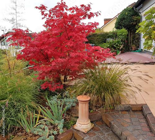 Faecherahorn, Herbst, Acer, palmatum, Osakazuki, japonicum; Canvas Print