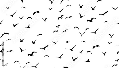 Seagulls flying in the sky, seamless vector pattern Wallpaper Mural