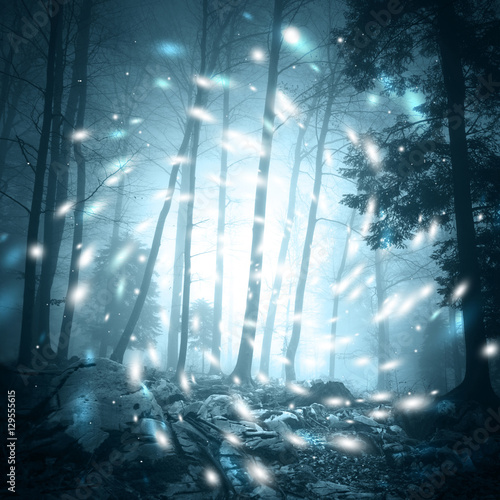 Foto op Canvas Zwart Fantasy blue color foggy forest tree landscape scene with mystic firefly lights.