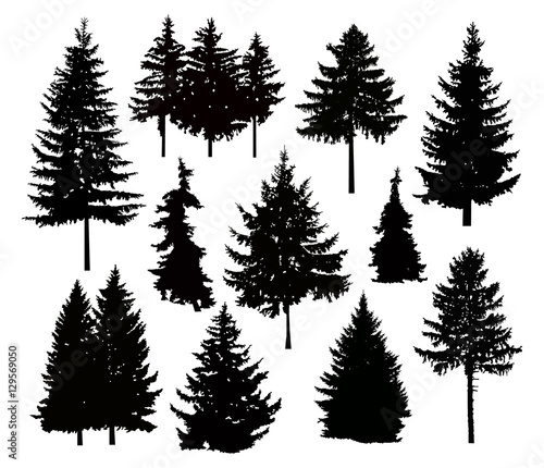 Silhouette of different pine trees. Can be used as poster, badge, emblem, banner, icon, sign, decor... Wall mural