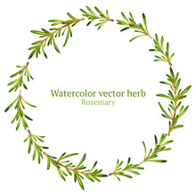 Watercolor Vector Wreath With Rosemary
