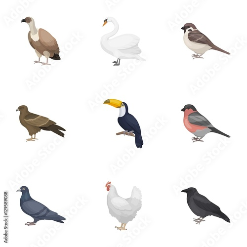 Fotobehang Vogel Bird set icons in cartoon style. Big collection of bird vector symbol stock illustration