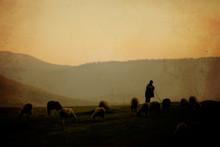 Vintage Sheep Background