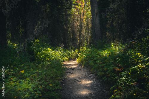 Valokuva  Forest path dappled with sunlight.