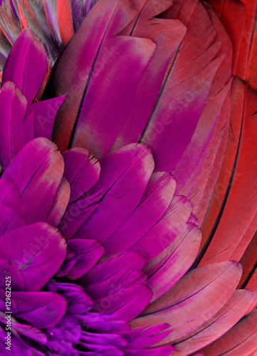 Photo  Purple and Red Macaw Feathers