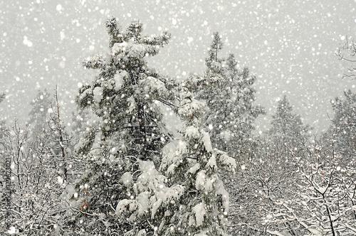 Fotografie, Obraz  Forest Winter Storm