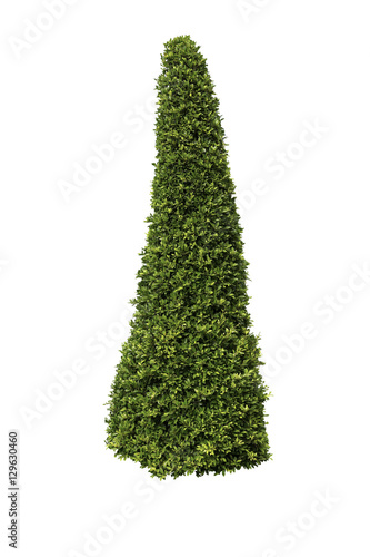 Tall bush isolated,Objects with Clipping Paths Wall mural