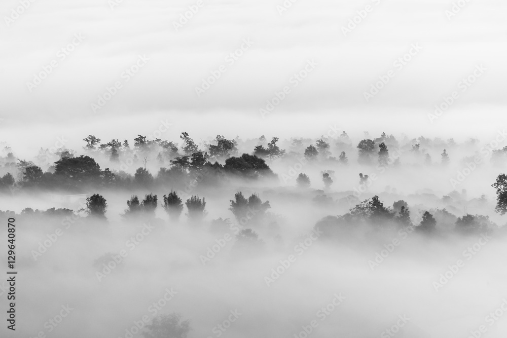 Fototapety, obrazy: sea of clouds over the forest, Black and white tones in minimalist photography