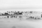 morze chmur nad lasem, czarno-białe odcienie w minimalistycznej fotografii - 129640870