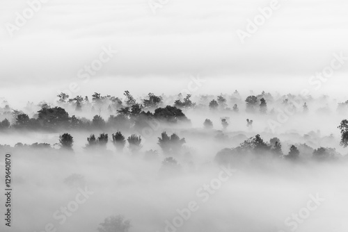 obraz PCV sea of clouds over the forest, Black and white tones in minimalist photography