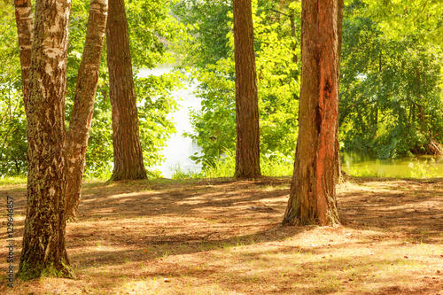 Poster Jaune forest on the shore of lake