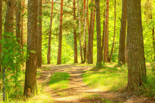 Photo Stands Road in forest forest on the shore of lake