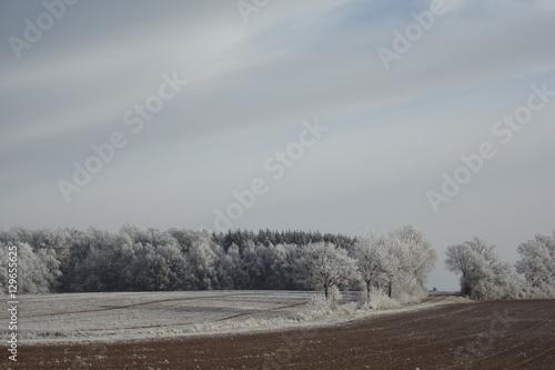 Frostiges Wald und Feld © Thorsten Grohse