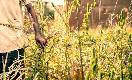 Staande foto Afrika African farmer