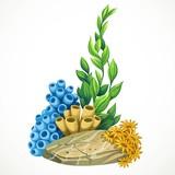 Marine algae, sponges and anemones growing on a rock sea life ob
