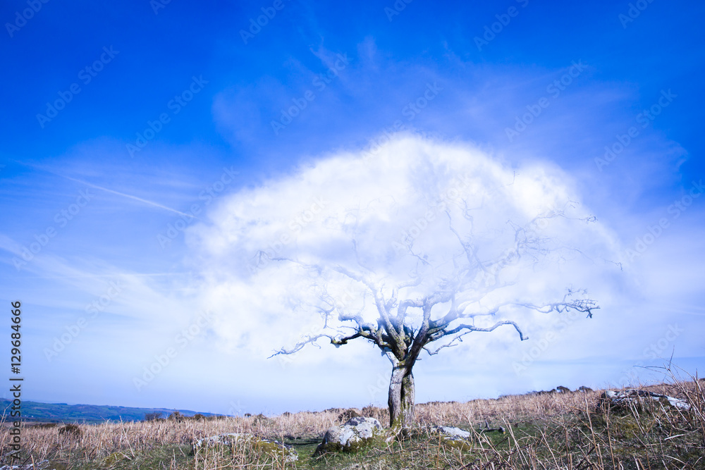 f8f87b6b8 Fotografie, Obraz Surrealistic fantasy tree with a cloud instead of crown of  leaves with blue sky | Posters.cz