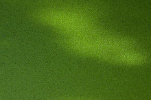 Green Duckweed On Background Of Pond