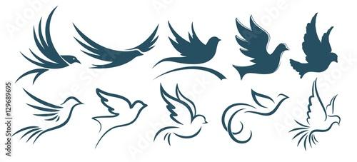 Photo  Logos birds.
