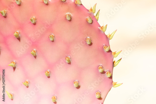 Close up of a pink and green cactus
