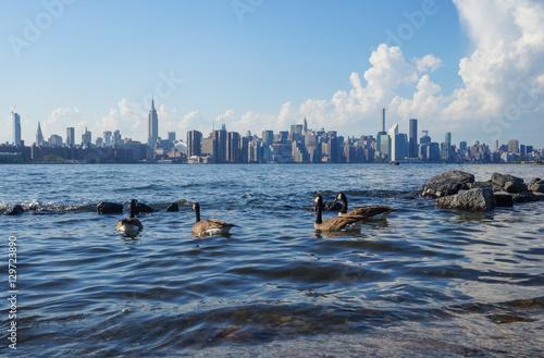 Photo  Geese and the Manhattan skyline