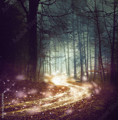 Fantasy forest road with firefly lights. Magic colored woodland fairy tale. Dreamy foggy forest tree with winding road background.