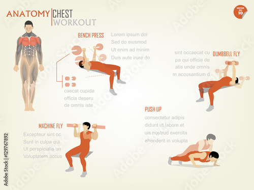 beautiful design infographic of chest workout consist of