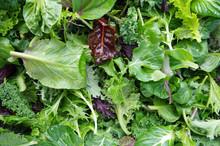 Fresh Mixed Salad Field Greens...