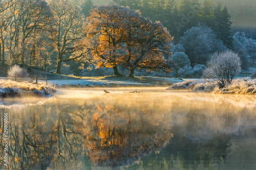 Foto op Canvas Herfst Beautiful sunlight illuminating a Great Oak Tree's Autumnal colours on a frosty fresh morning in the Lake District.