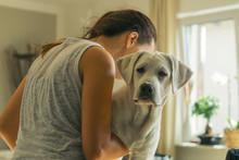 Junger Labrador Retriever  Hun...