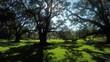 Beautiful summer sun shining through big majestic live oaks canopies
