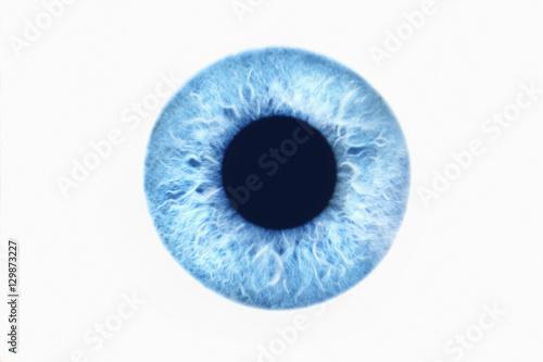 Garden Poster Iris Closeup of blue eye on white background