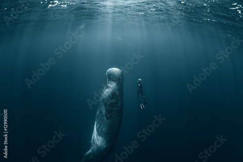 Fotografia, Obraz Sperm whale and Freediver