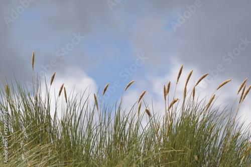 Keuken foto achterwand Noordzee Düne vor Wolken. Auf Zeeland