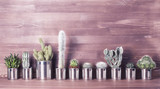 Fototapeta Panels - Cactus and succulents on a wooden background. Recycle aluminum can