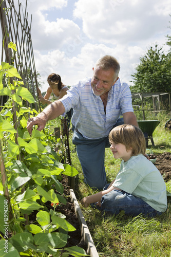 Happy boy with family gardening in allotment Wallpaper Mural