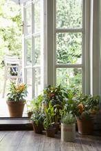 Potted Plants On Hardwood Floor By Open Door In House