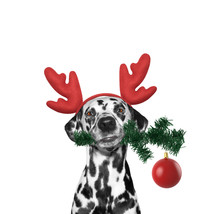 Santa Dog In Reindeer Antlers With Fir-tree And Xmas Ball