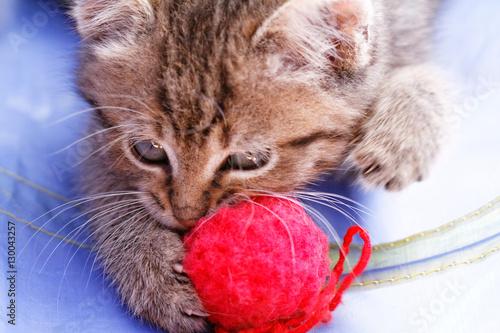 Printed kitchen splashbacks Cat Cute small cat