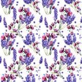 Wildflower lawendowy kwiatu wzór w akwarela stylu odizolowywającym. - 130050870